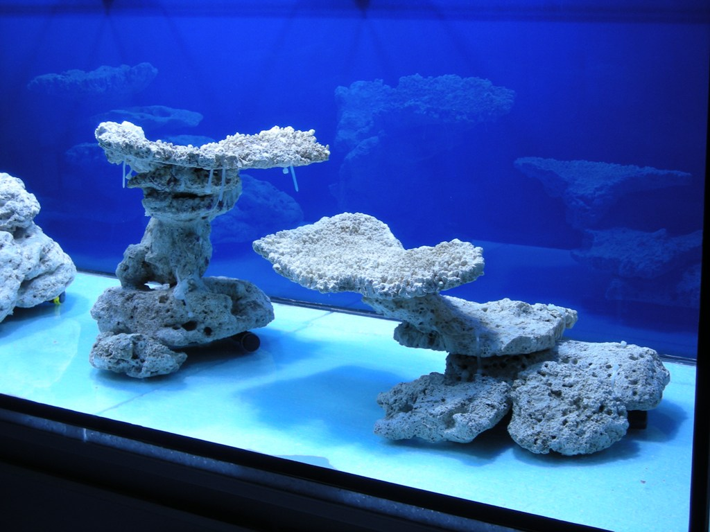 minimalist aquascaping - page 31 - reef central online community