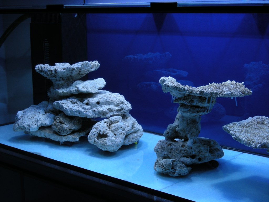 Minimalist Aquascaping Page 31 Reef Central Online Community